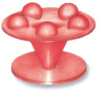 Membrana Aquavibron - pięciokulowa (o silnym działaniu)